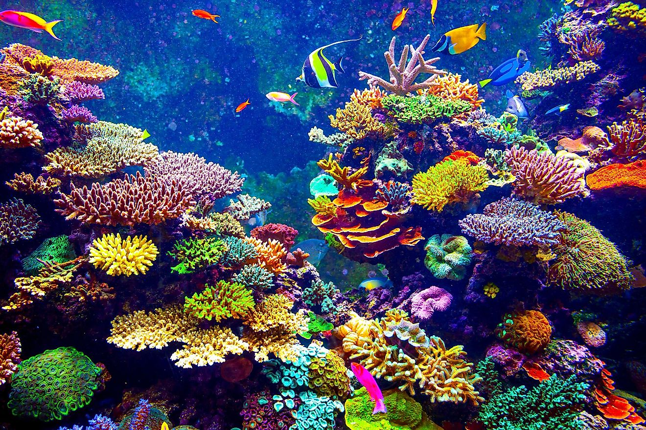 I coral reef in the Singapore Aquarium. Image credit: Volodymyr Goinyk/Shutterstock