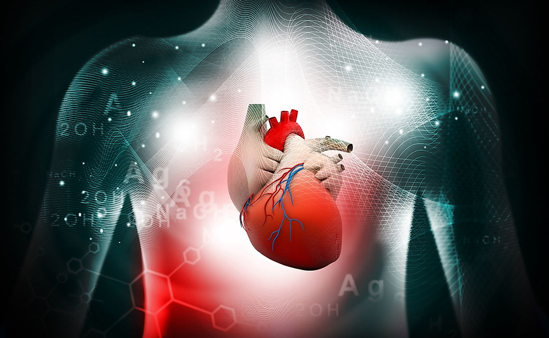 Poor lifestyle choices and genetic factors place many people at high risk for life threatening cardiovascular events.