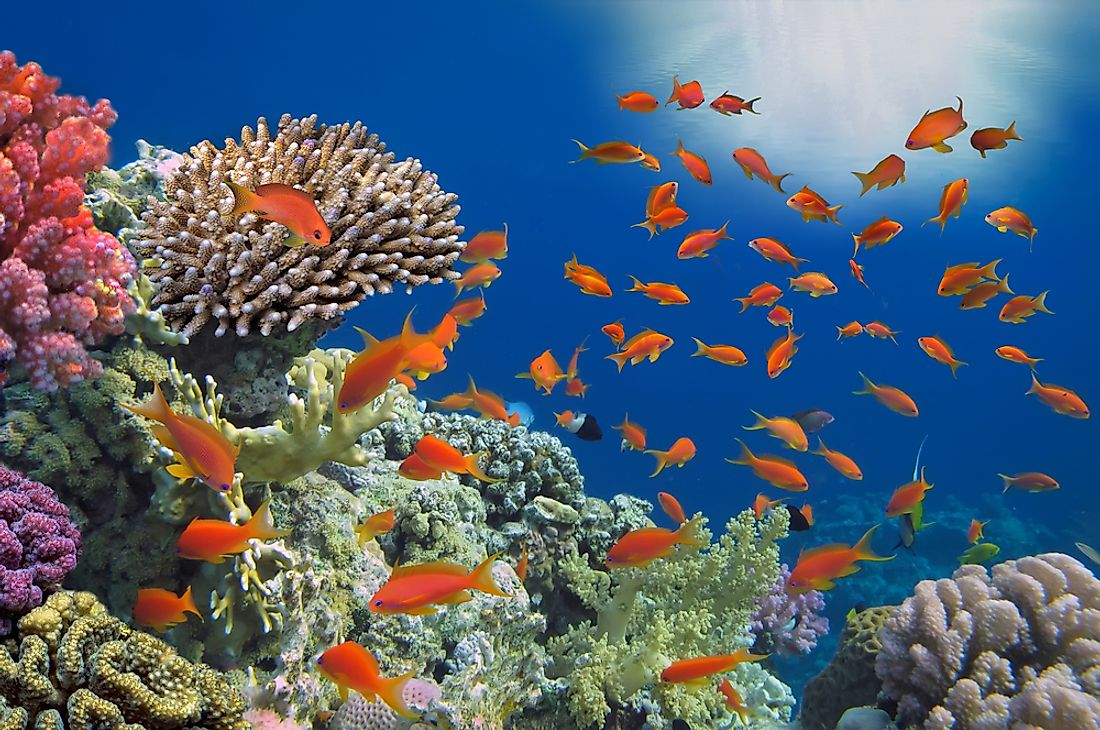 A quarter of marine species make their homes in coral reefs.
