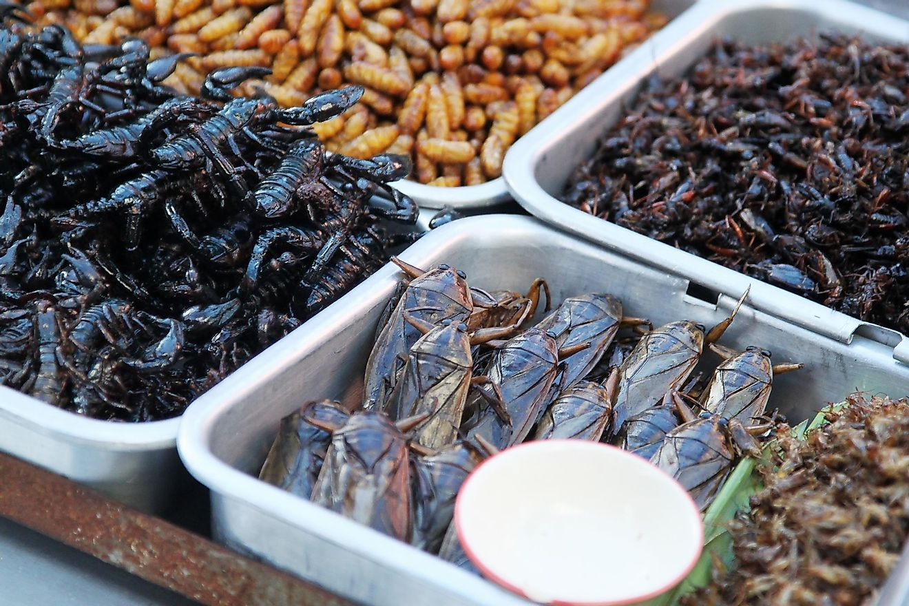Insects as food.