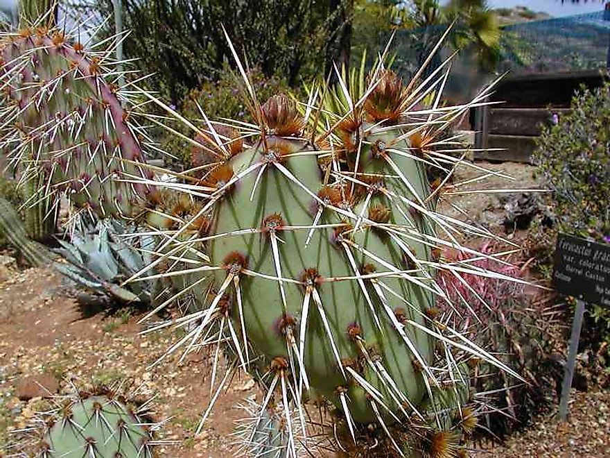 A Cactus Plant With Its Sharp Spines