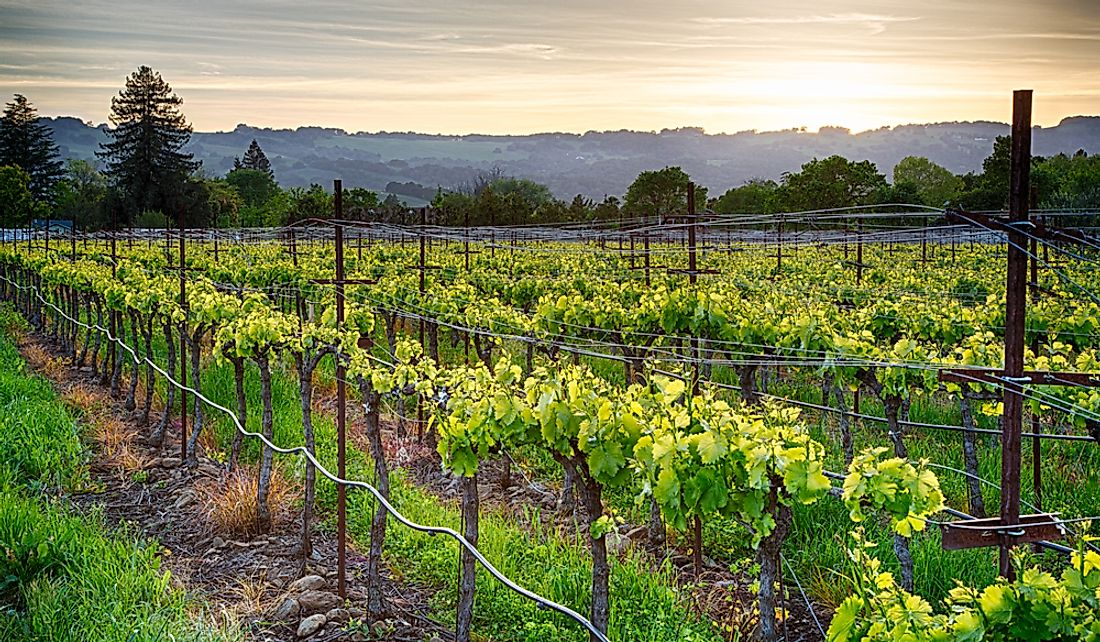 California's Wine Country is a popular tourism region.