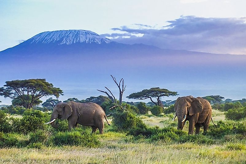 The high peak of Mount Kilimanjaro starkly contrasts its flat surroundings in Tanzania.