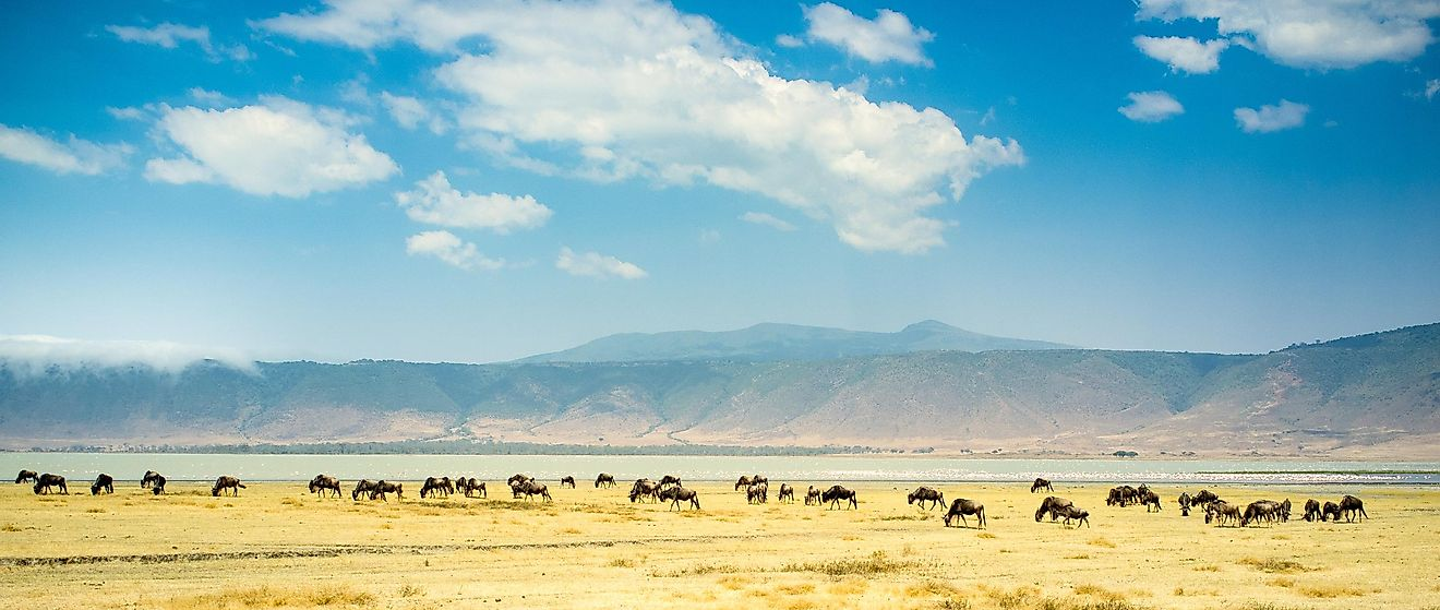 The Ngorongoro Crater, one of Africa's seven wonders, is the biggest inactive and intact unfilled volcanic caldera in the world.