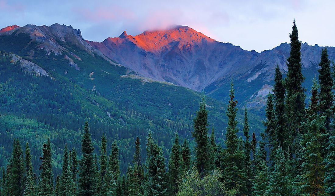 Sunrise over the spruce forests and mountain peaks of Denali National Park and Preserve in Alaska.