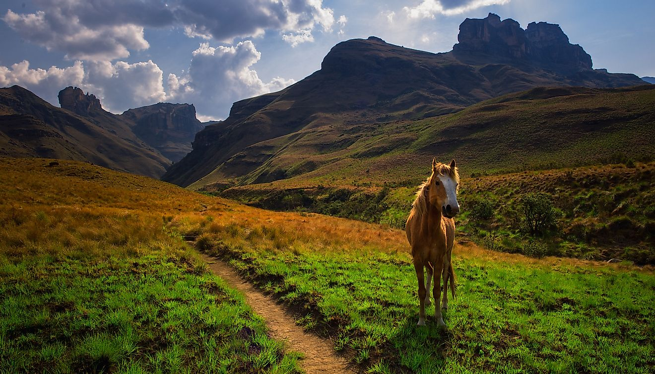 The spectacular Drakensberg mountain landscape in South Africa. Image credit: Quentin Oosthuizen/Shutterstock.com