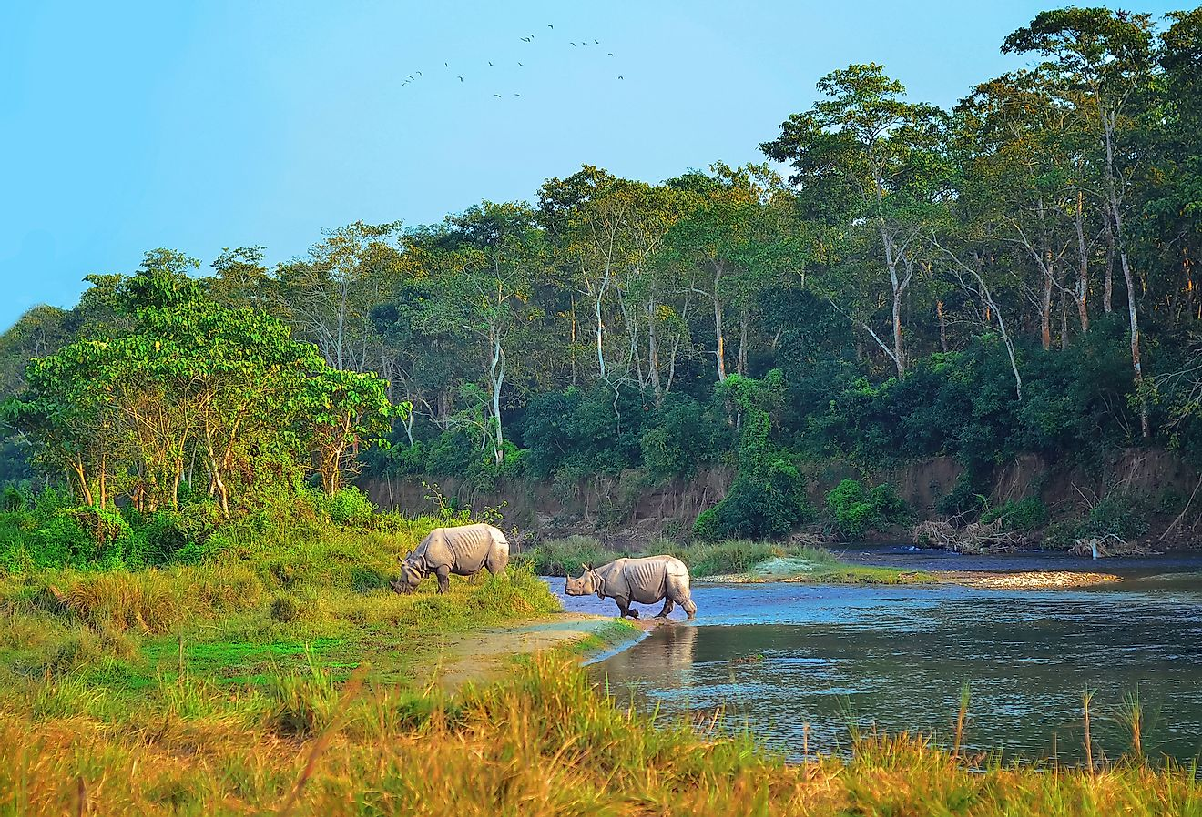 Indian rhinos in Chitwan National Park in Nepal. Image credit: Natalia Maroz/Shutterstock.com
