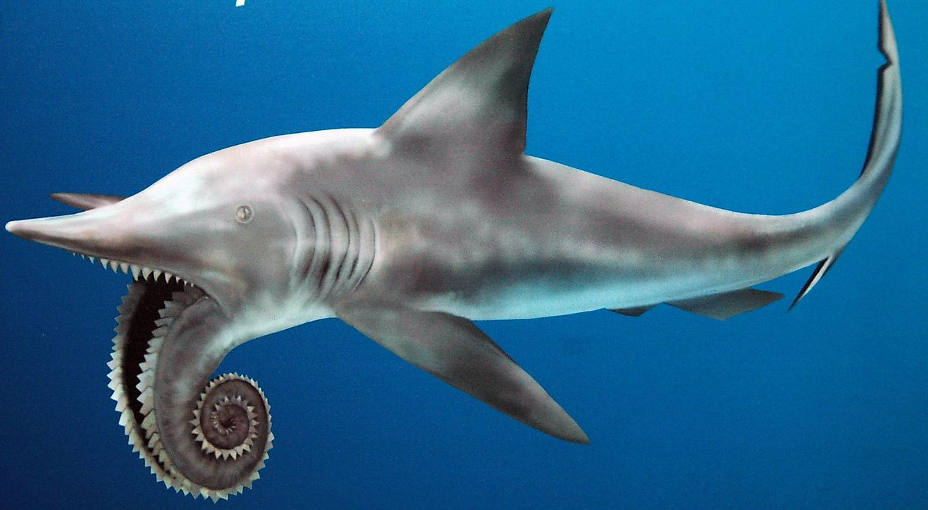 Outdated Helicoprion reconstruction (public signage, Field Museum of Natural History, Chicago, Illinois, USA). Credit: James St. John