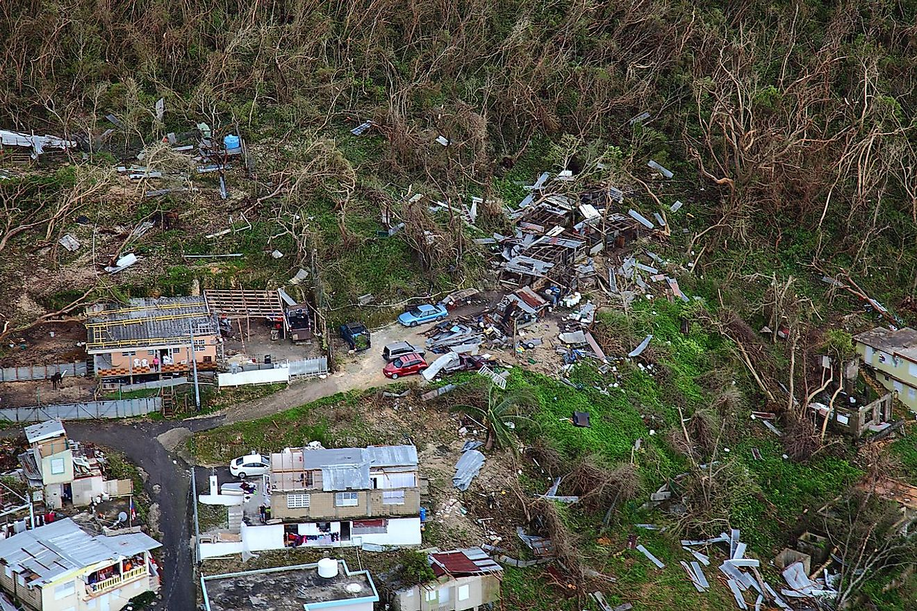 Thousands of homes suffered varying degrees of damage while large swaths of vegetation were shredded by the hurricane's violent winds.