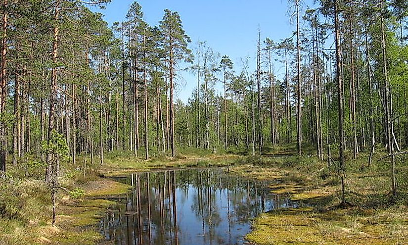 A little bog lake in Lauhanvuori National Park, Isojoki, Finland.