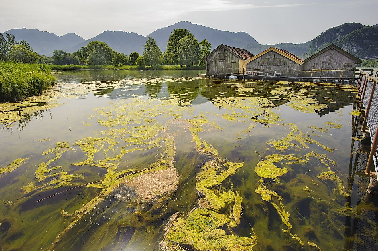 Algal bloom in Lake Bavaria