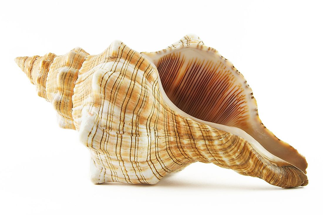 Have you ever tried to hear the ocean through a conch shell?