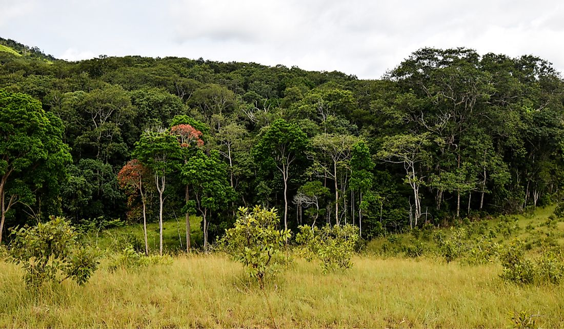 Forestry is an important industry in Gabon.