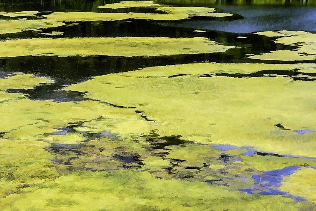 High levels of fertilizer runoff can result in algae growth in water.
