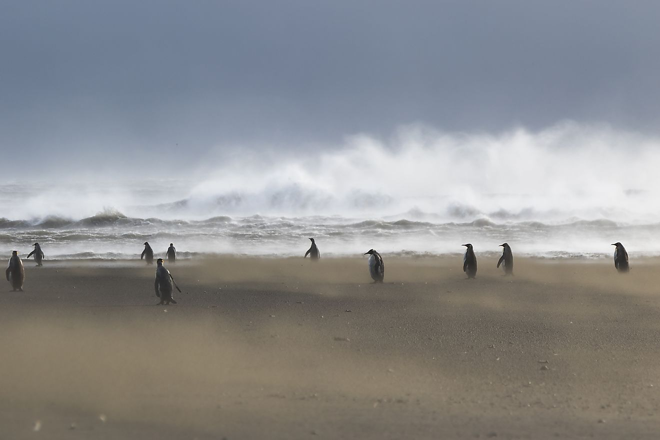 Extreme weather in the Kerguelen Islands but the emperor penguins do not seem to mind it at all. Image credit: Etienne Pauthenet (distributed via imaggeo.egu.eu)