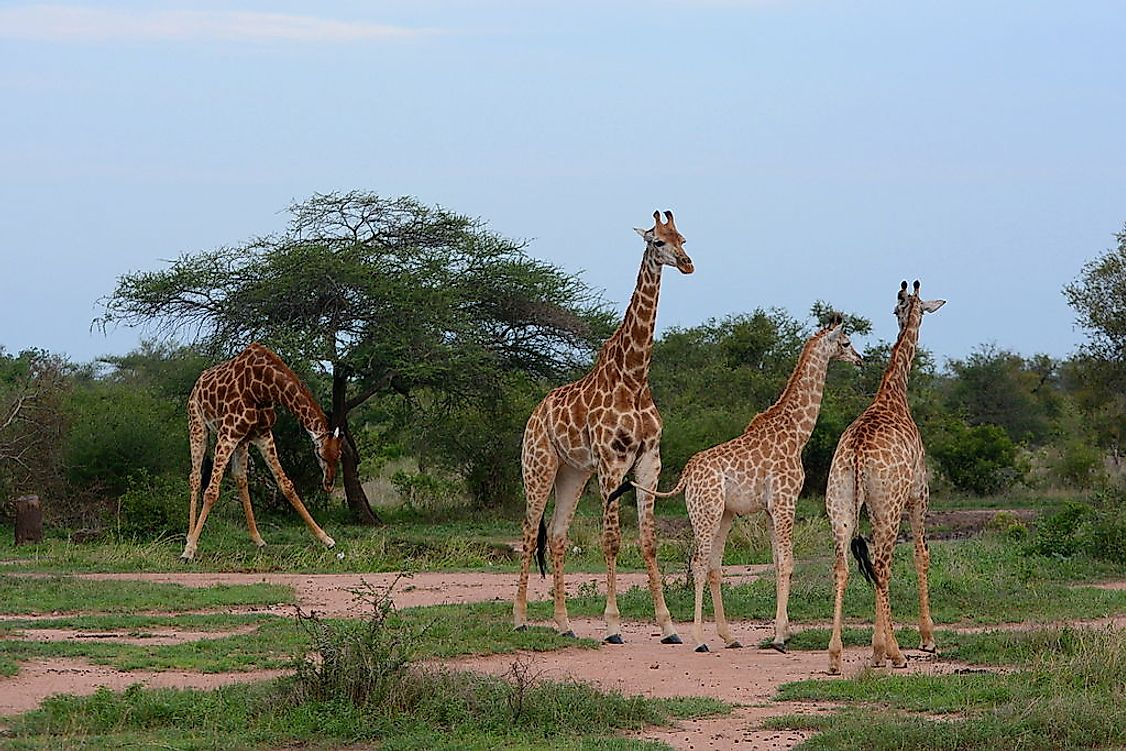 Kruger National Park in South Africa is a popular tourist destination in the country.