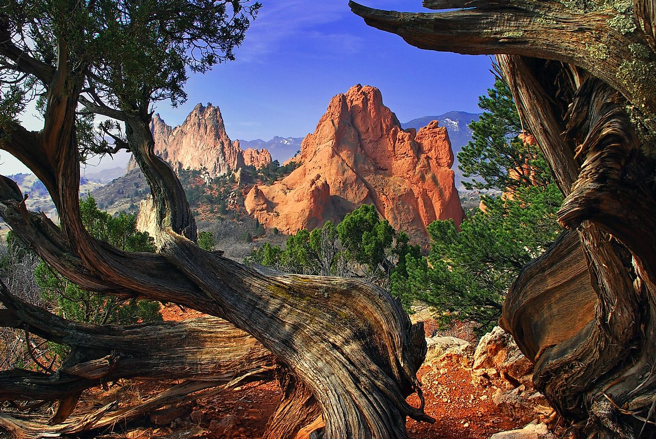 South Gateway Rock formation framed by twisted Juniper Trees at the Garden of the Gods Park in Colorado Springs, Colorado, USA.