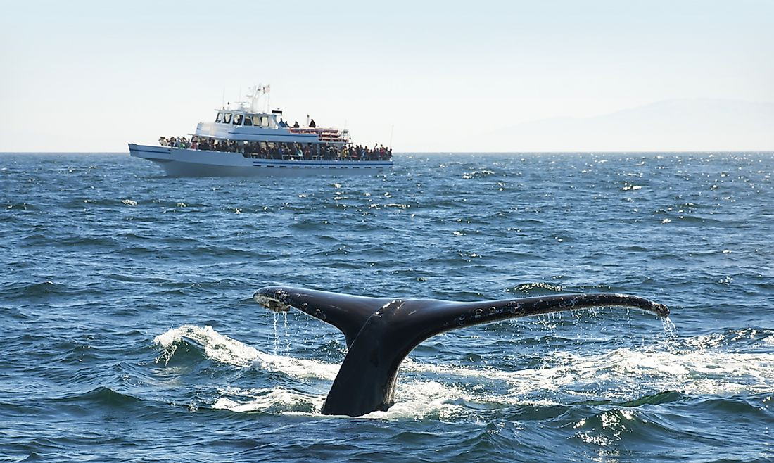 Whale watching is a popular tourist activity in many ocean-side cities around the world.