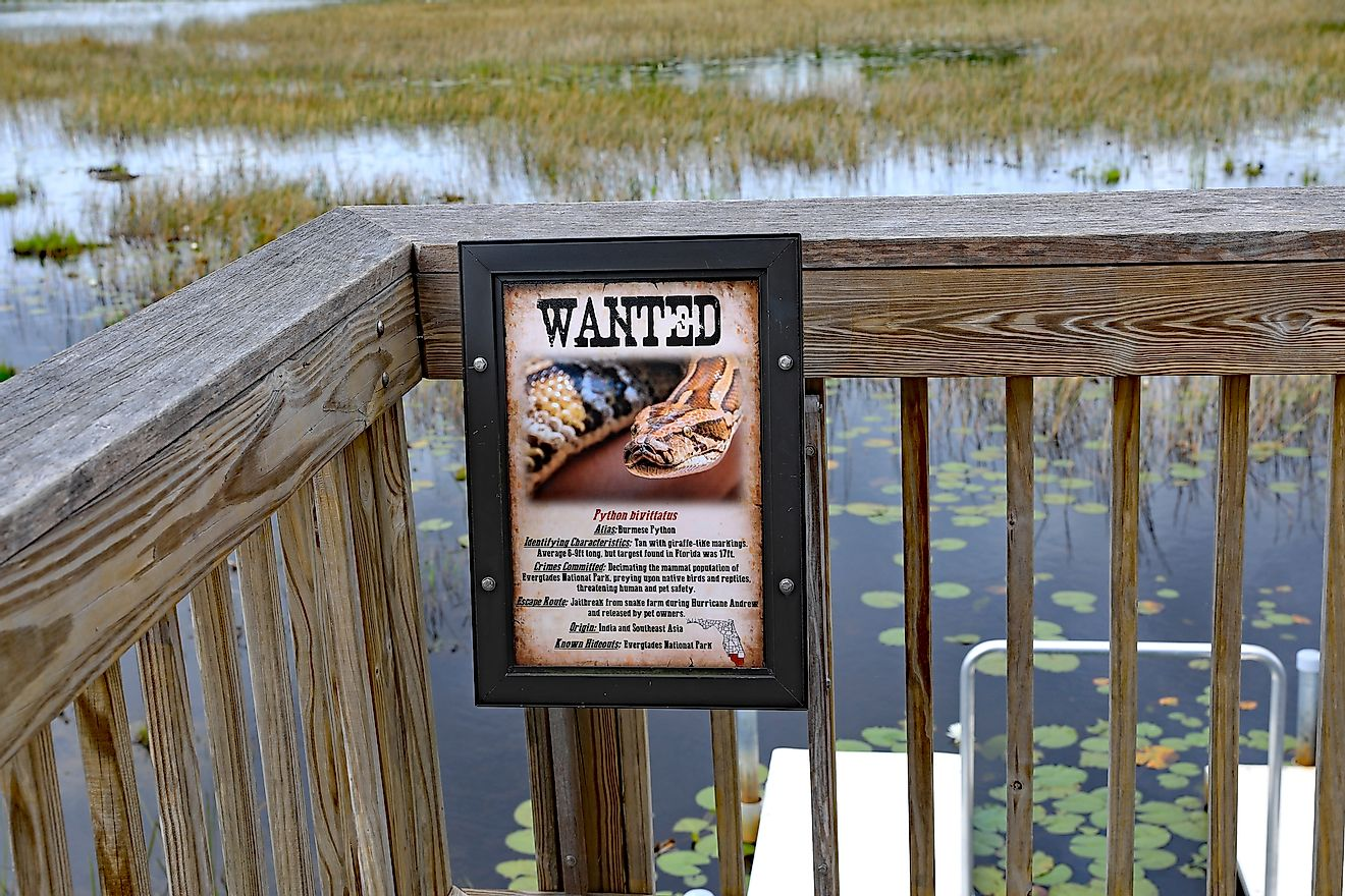A board in the Everglades area of Florida warning about Burmese pythons that are an invasive species in the region. These non-native snakes are harmful to the local fauna like birds. Image credit: Thomas Barrat/Shutterstock.com