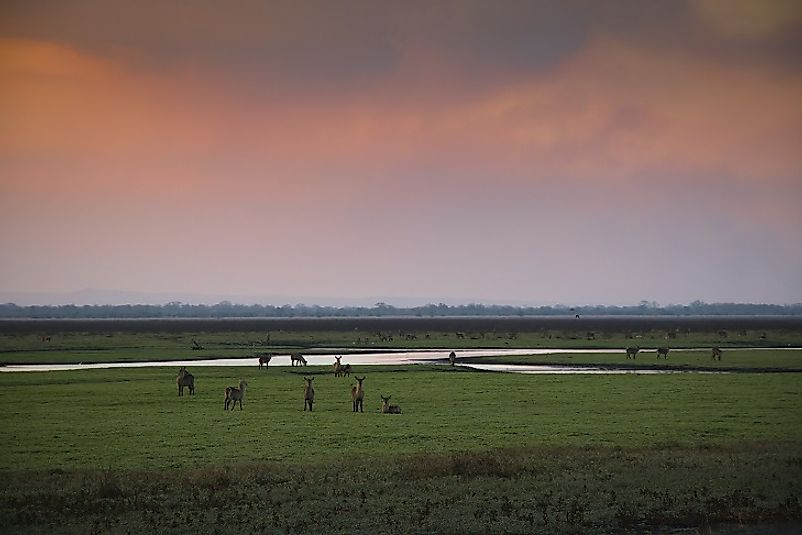 Antelope gather near the water at sunset in Gorongosa National Park.