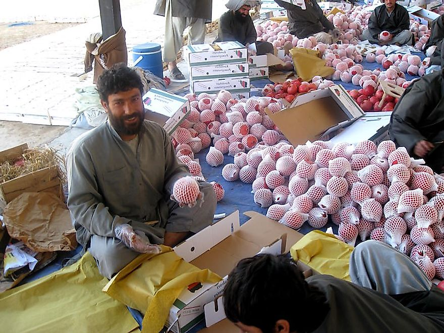 An Afghan man sorting and packing pomegranates.