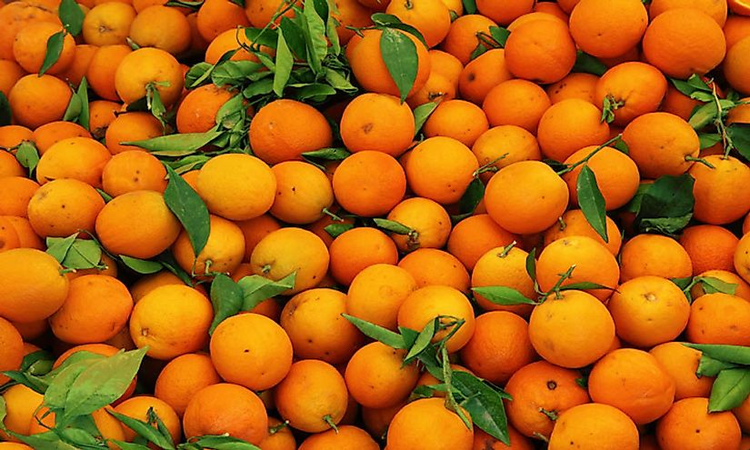 Orange is one of the most popular citrus fruit consumed by populations worldwide.