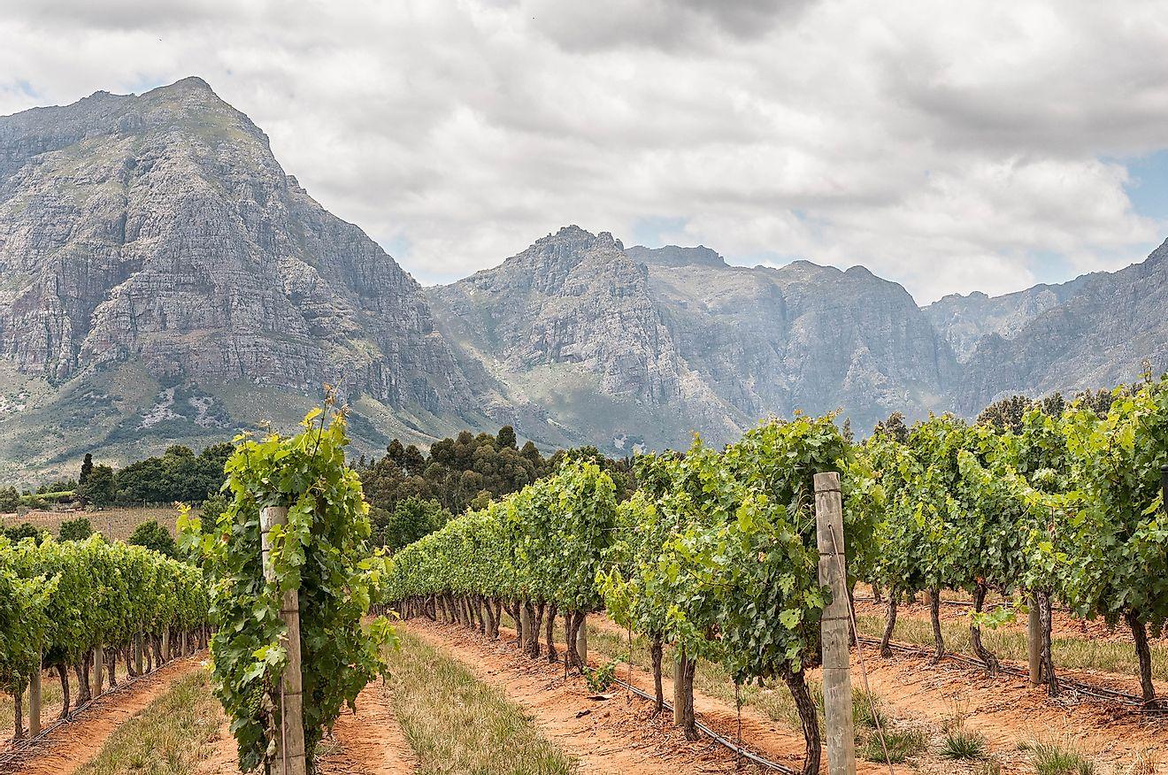 View of vineyards near Stellenbosch in the Western Cape Province of South Africa. Image credit: Grobler du Preez/Shutterstock.com