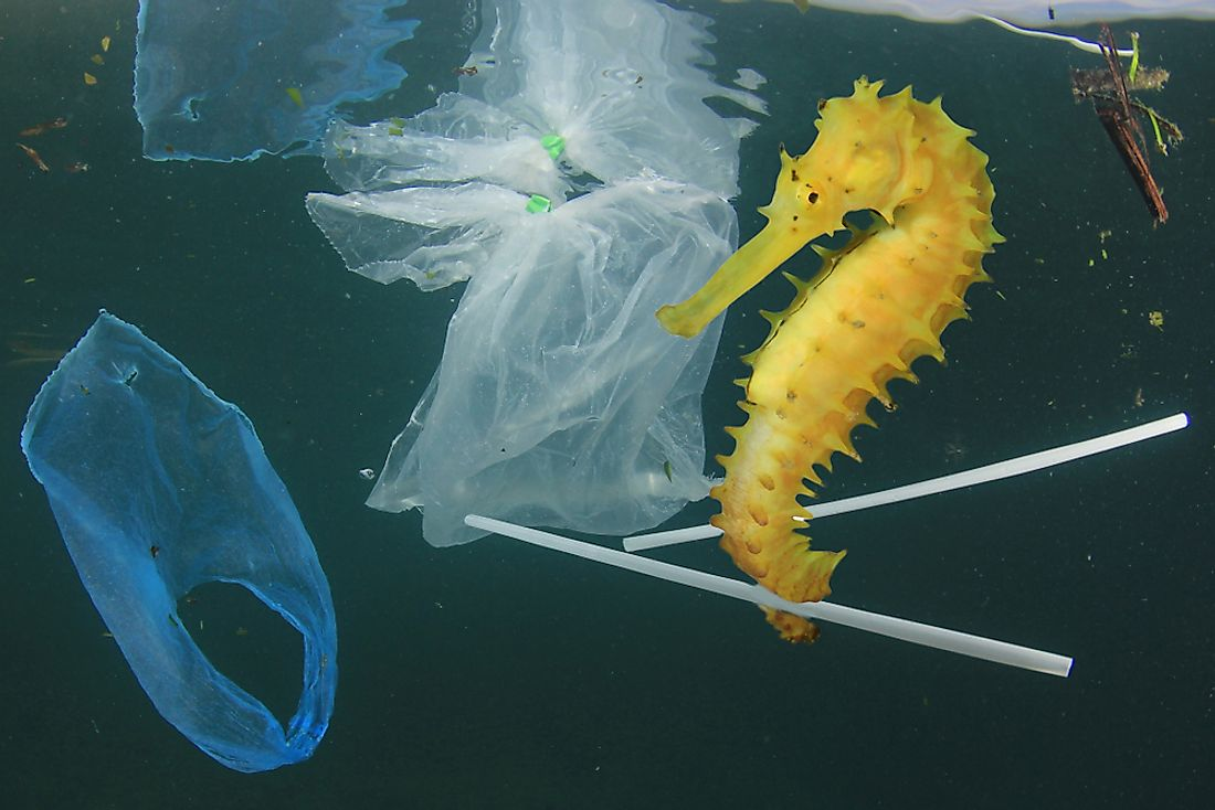 Plastic pollution is dangerous to marine life.