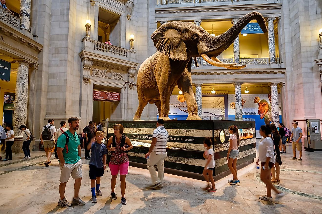 The Main Hall of the Smithsonian National Museum of Natural History. Credit: Kamira / Shutterstock.com