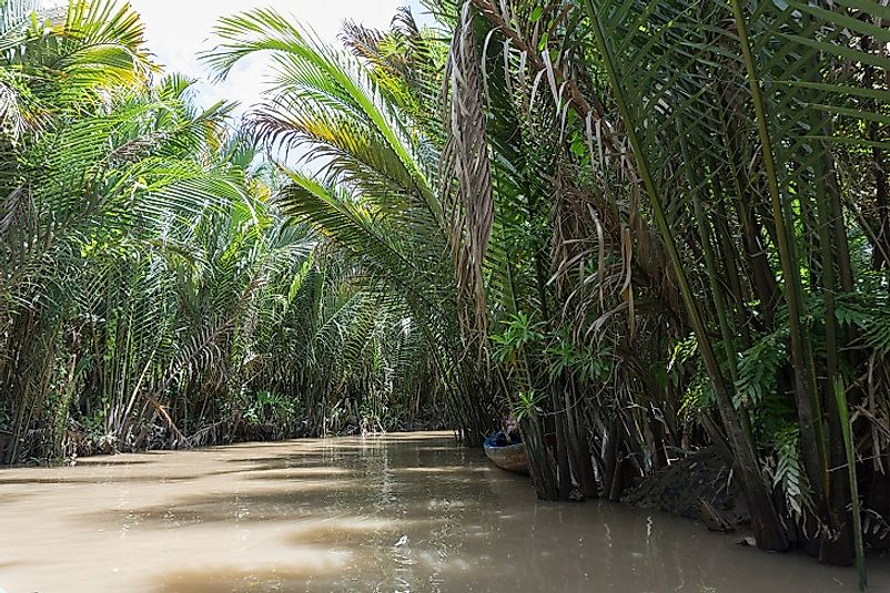 These tropical rainforests reach out to the banks of the Mekong River near its delta.