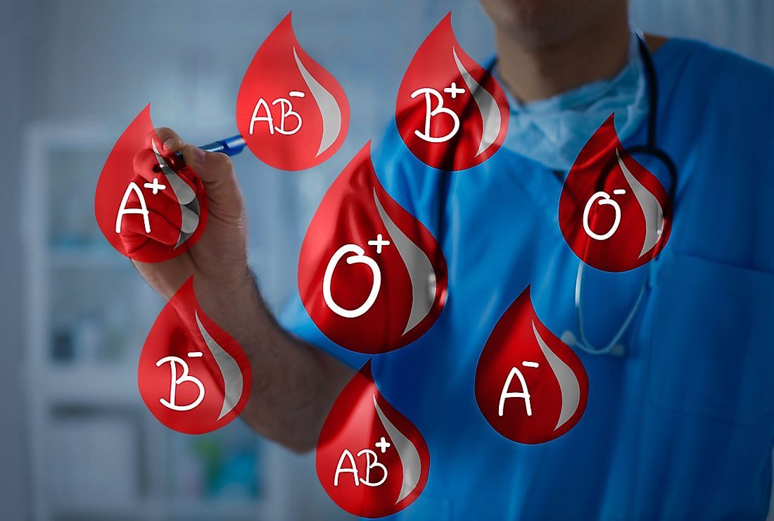 Blood groups are categorized by antibodies and substances contained (or lacking) in the blood.