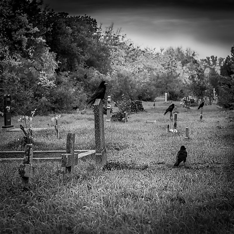 As it would turn out, it is not only human funerals that crows and ravens are associated with, as they hold some of their own.