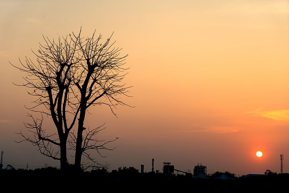 Dying trees is just one of the many ways climate change manifests itself. Photo credit: shutterstock.com.