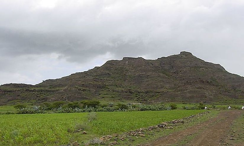 Teff field at the base of a small hill in the Eritrean Highlands.