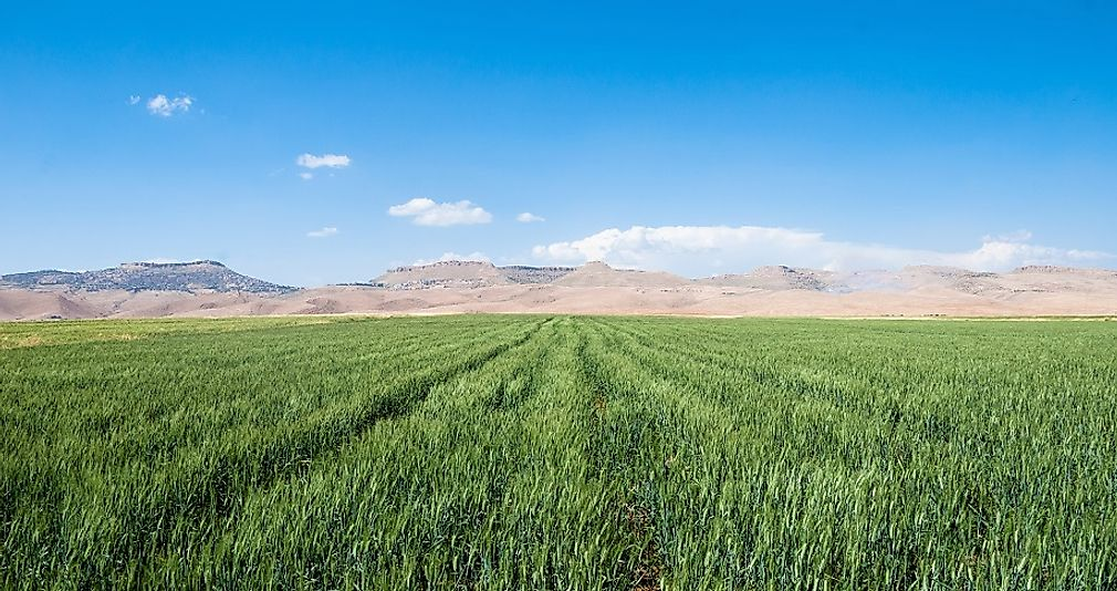 As agriculture, especially the raising of wheat and barley, developed in the fertile river valleys of the Middle East and West Asia, great civilizations followed in the wake.