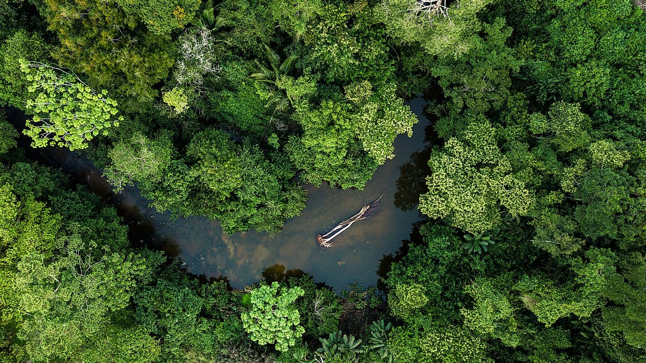 An aerial view of the Amazon rainforest, the world's biggest rainforest.