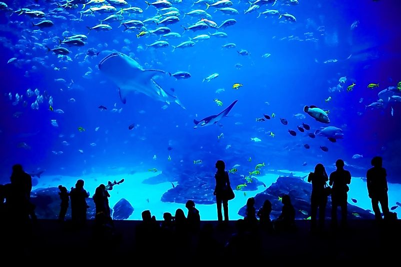 Visitors dwarfed by the tanks of the Georgia Aquarium in the United States.