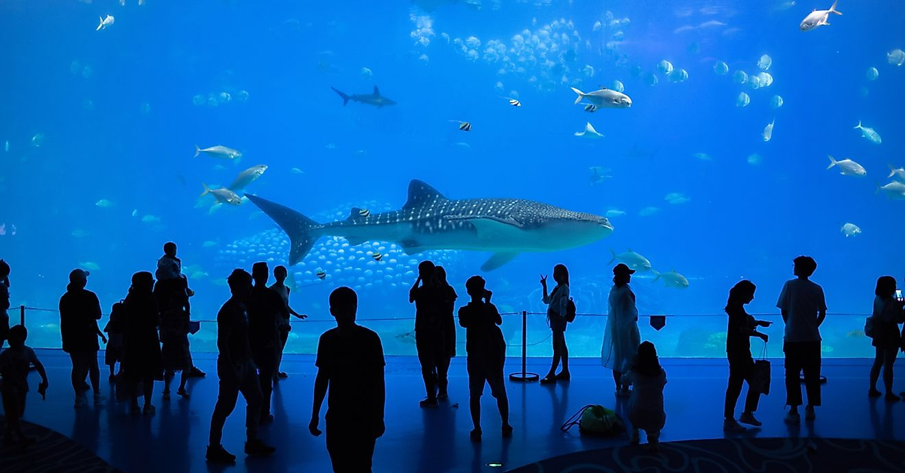 The Chimelong Ocean Kingdom in China is the world's largest aquarium. Image credit: Michael Gordon/Shutterstock
