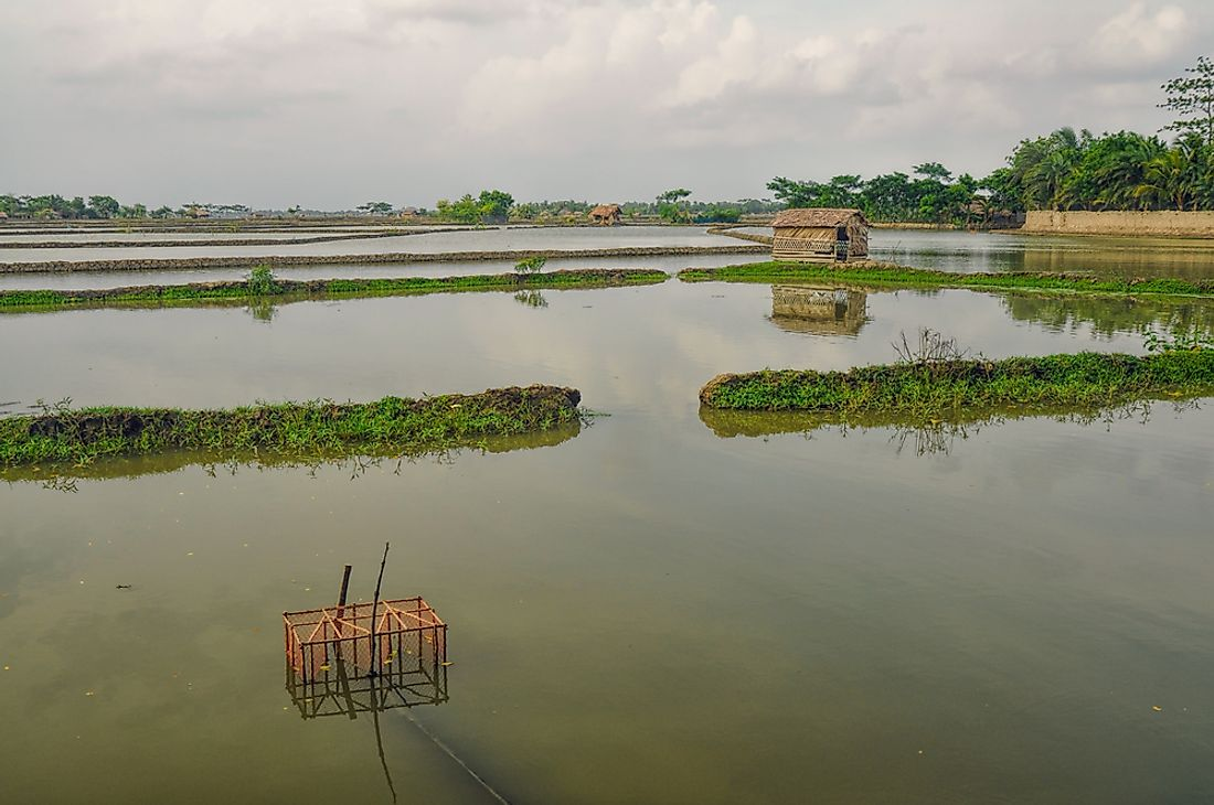 Serious flooding is a concern related to climate change. Pictured here: flooded fields in Bangladesh.