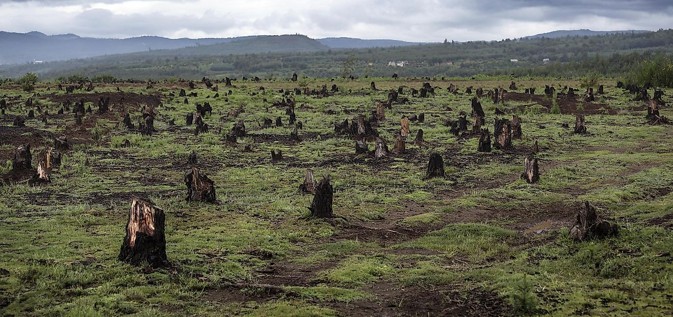 Deforestation without regard for sustainability or the renewal of forests has caused a massive devastation in the amount of wooded landmass left in a variety of countries across the globe.