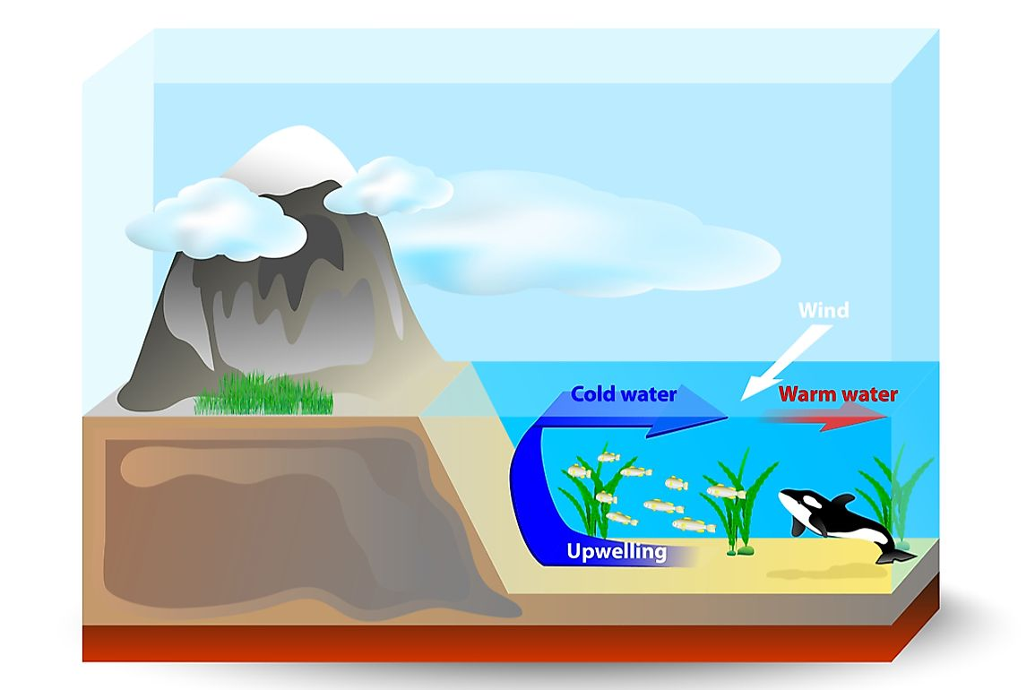 Upwelling drives cooler, denser water from the lower surface of the ocean to the upper surface.