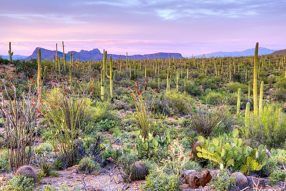 Saguaro National Park was named for the ubiquitous saguaro cacti native to the Sonora Desert.