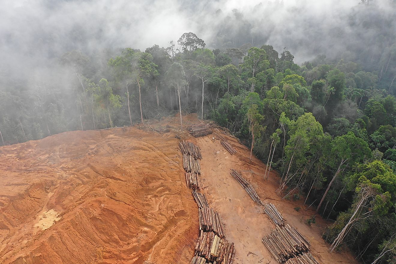Deforestation in the rainforests of Malaysia.