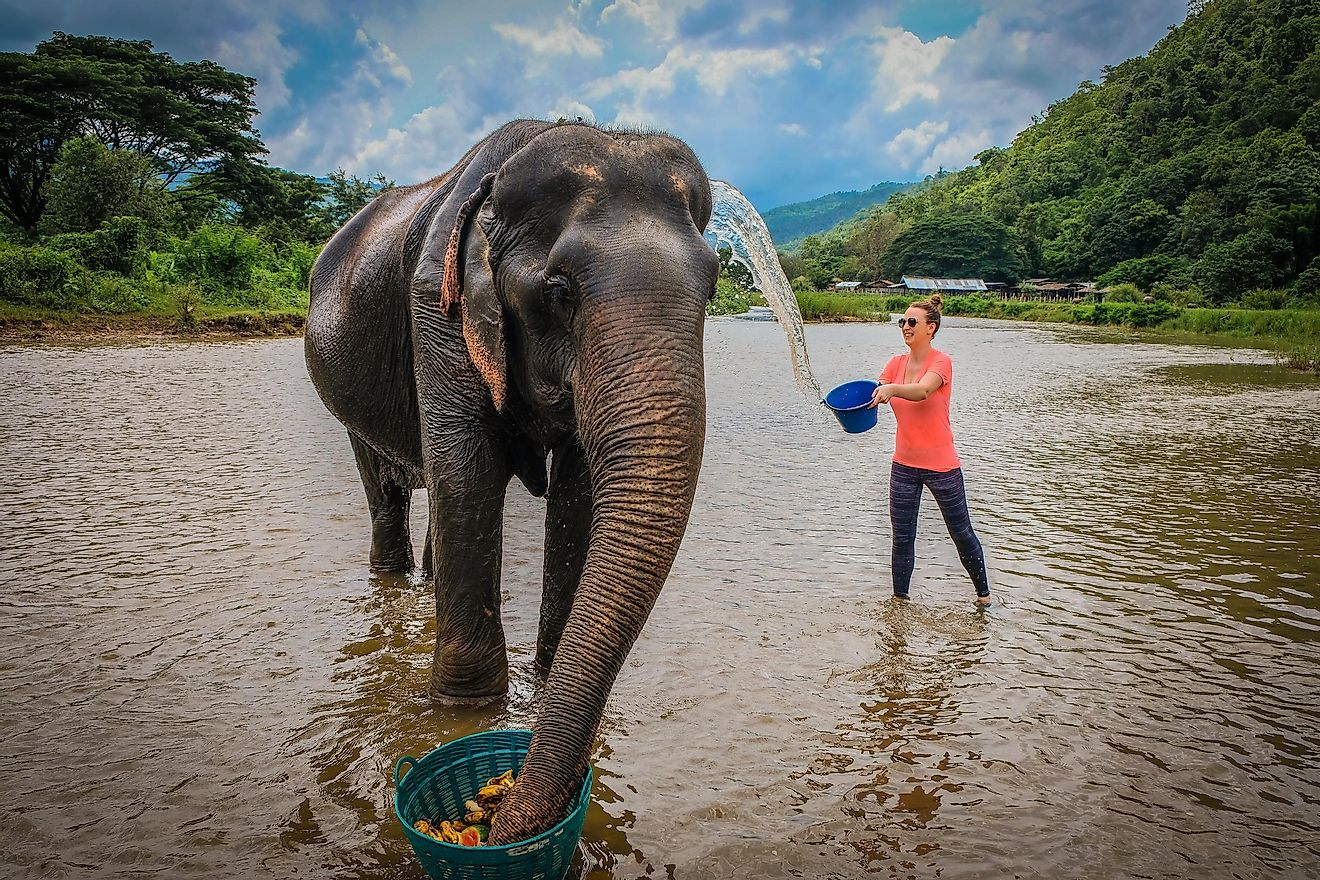 Elephant sanctuaries that allow you to feed and bathe elephants are ethical, but not ones that let you ride one. Image credit: Gregory Zamell/Shutterstock