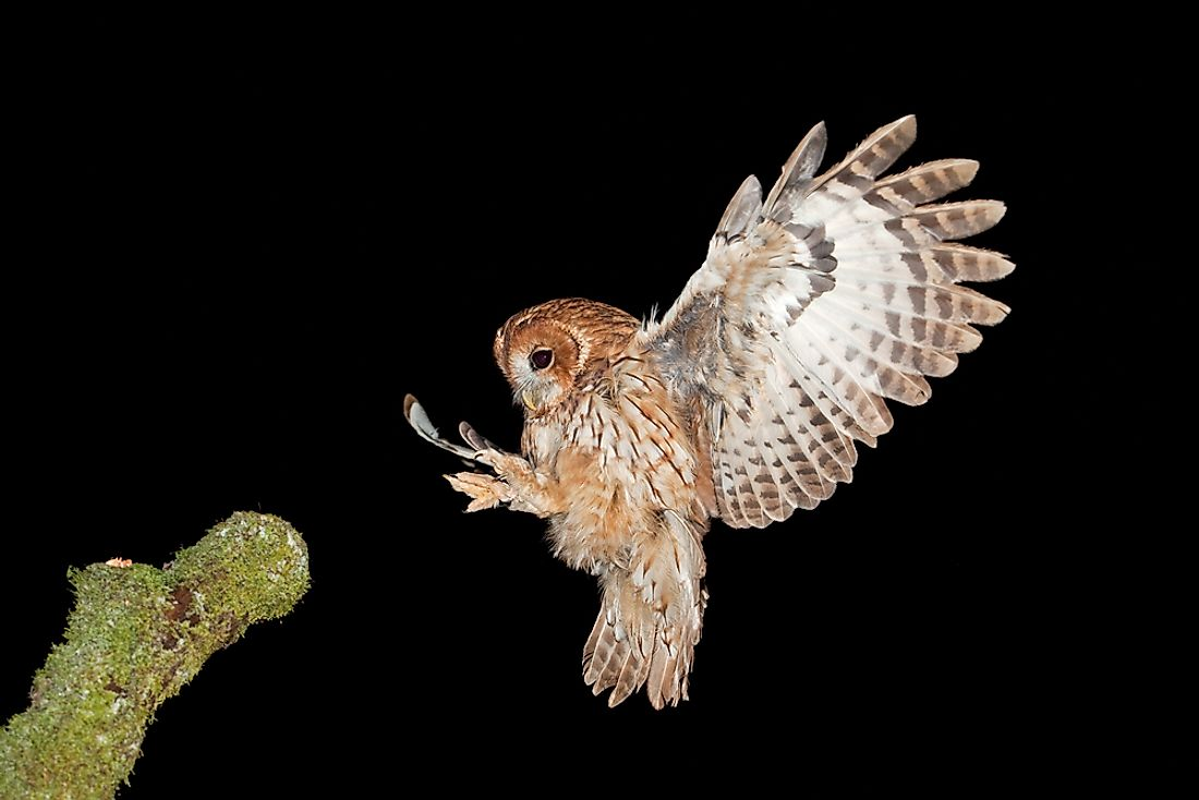Owls are different from most other bird species and possess unique characteristics like large eyes and a highly flexible head.