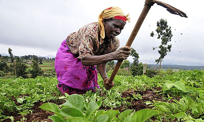 In many countries across Africa, subsistence farming is practiced by the rural people of the nation for survival.