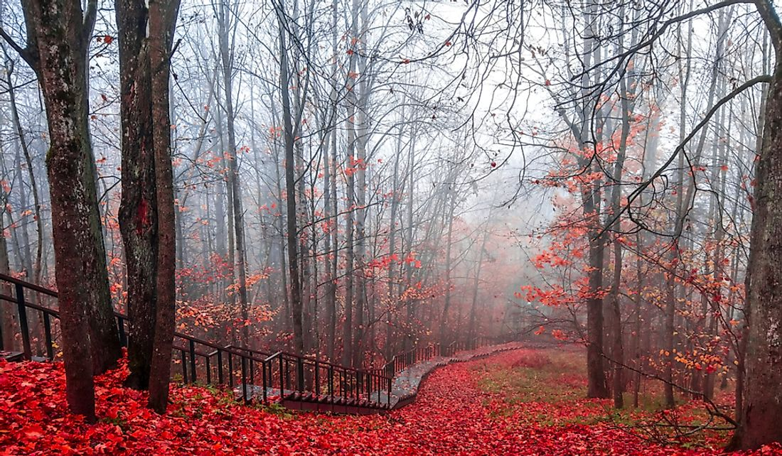 Reduced visibility on a path through the autumn forest due to mist.