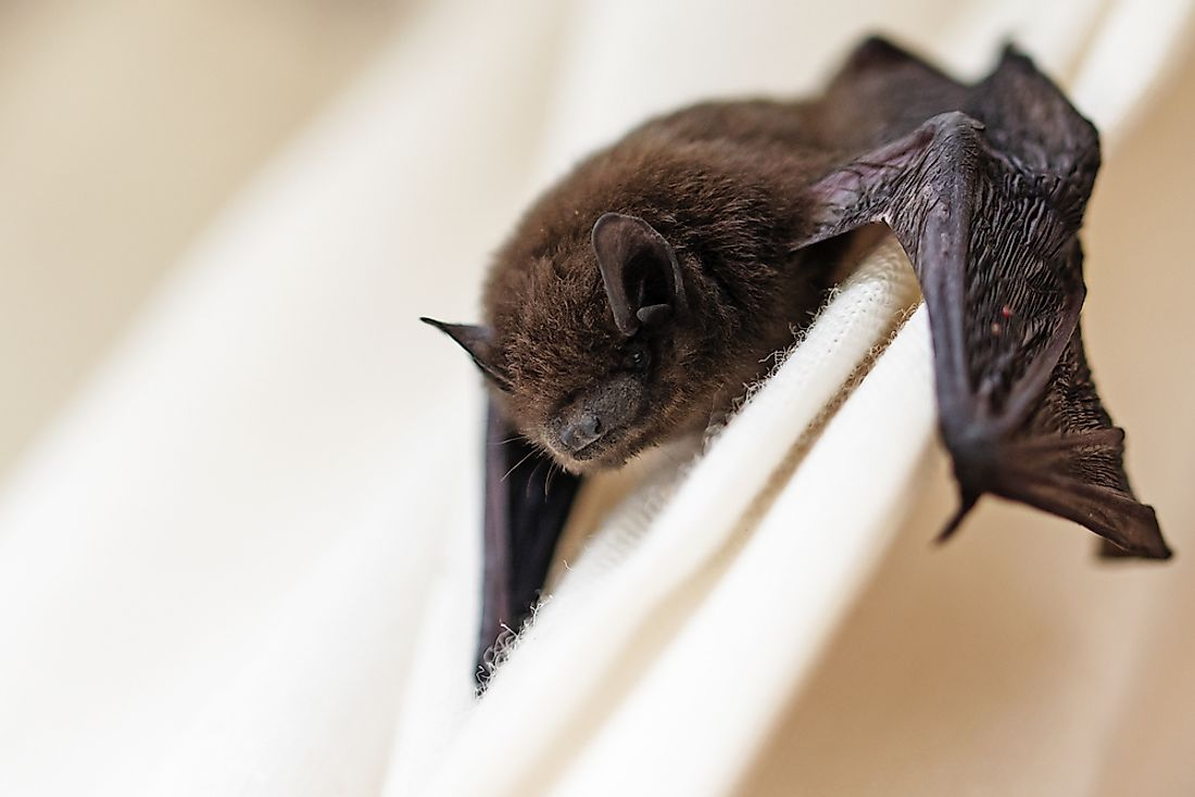 Bats are often noted for their amazing echolocation skills.