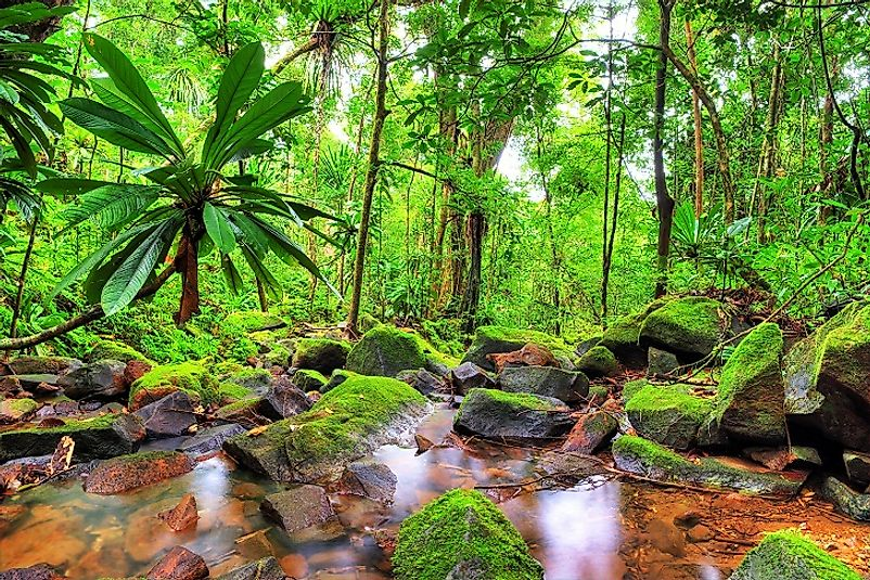 Lush jungles in Masoala National Park.
