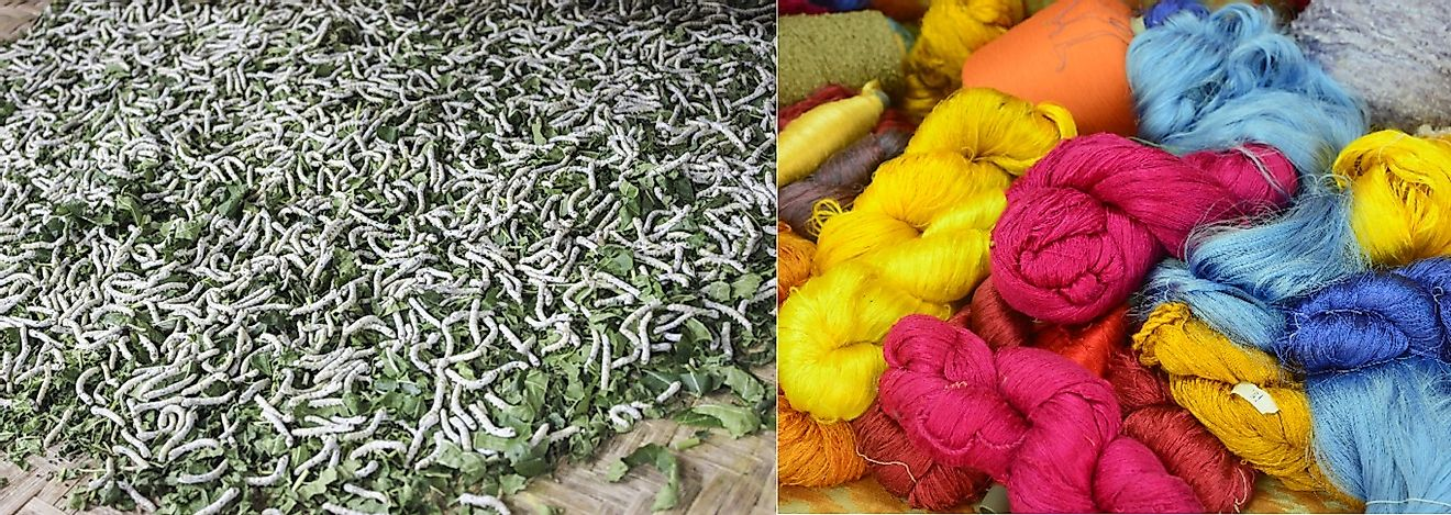 LEFT: Silkworm larvae dine on mulberry leaves. RIGHT: Silk thread that has been spun from their cocoons.